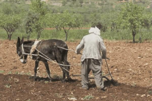 arando a terra nos tempos bíblicos