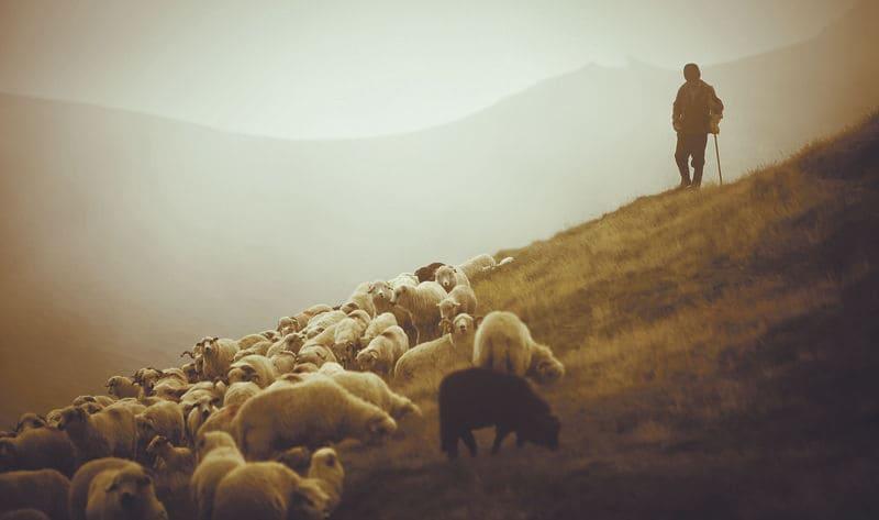 salmos 23 estudo versiculo por versiculo explicado