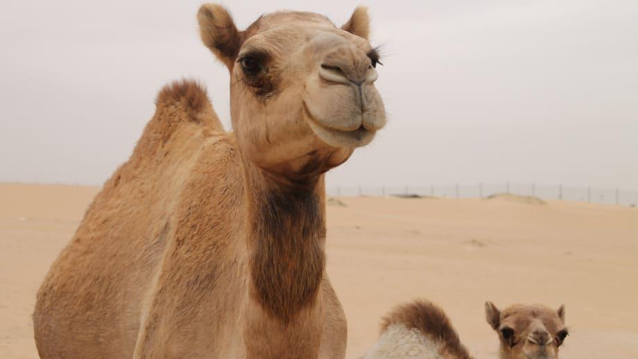 passar um camelo pelo fundo de uma agulha