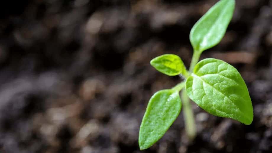 planta será arrancada na bíblia